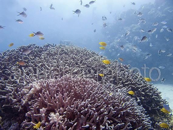 Wild Reef – Australia GBR 01