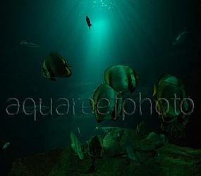 Deep aquarium display 01