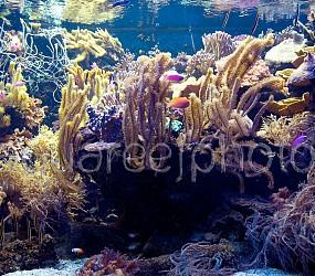 Aquascaping 01