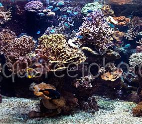 Aquarium récifal 01