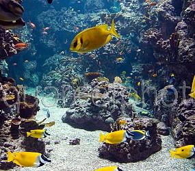 Aquarium display 02