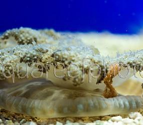 Cassiopeia andromeda 05