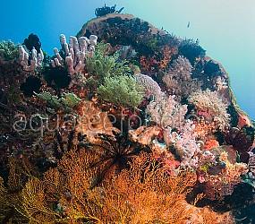 Wild Reef – Komodo 01