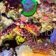 Synchiropus tudorjonesi – parade nuptiale 08 – trio